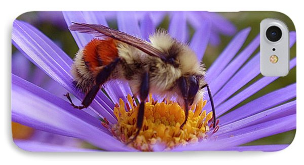 Orange-banded Bee IPhone Case by Rona Black