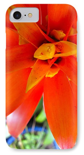 Orange Bromeliad IPhone Case by Lehua Pekelo-Stearns