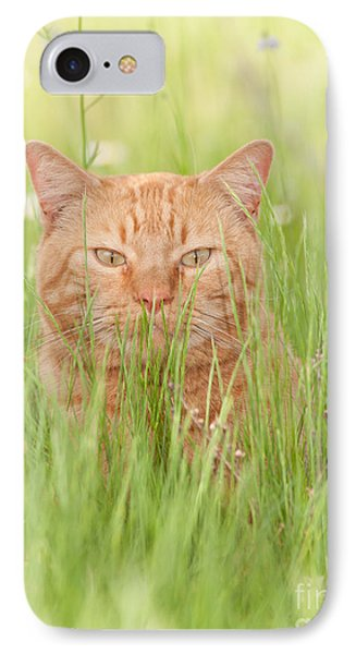 Orange Cat In Green Grass IPhone Case