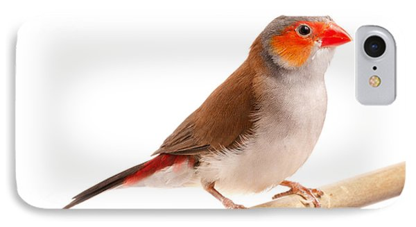 IPhone Case featuring the photograph Orange-cheeked Waxbill Estrilda Melpoda by David Kenny