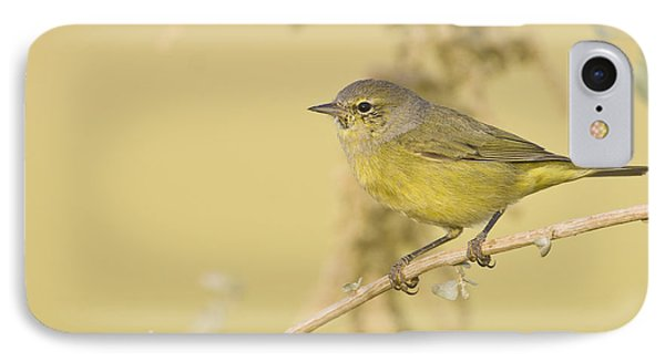 Orange Crowned Warbler IPhone Case