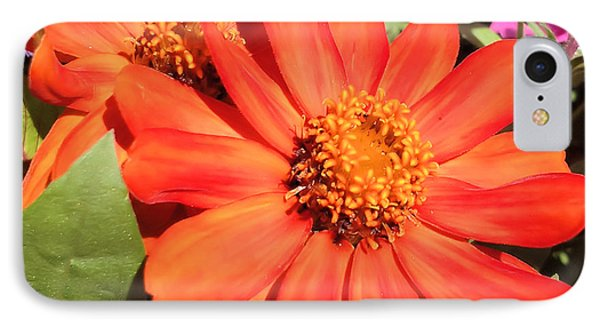 Orange Daisy In Summer IPhone Case by Luther Fine Art