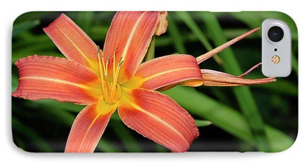 Orange Day Lily Hemerocallis Fulva IPhone Case by Nigel Downer