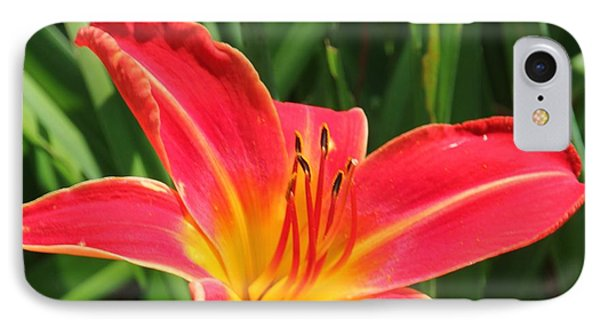 IPhone Case featuring the photograph Orange Flower by Bill Woodstock