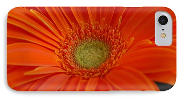 Orange Gerber Daisy IPhone Case by Patrick Shupert