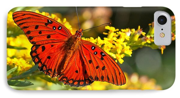 Orange Gulf Fritillary IPhone Case