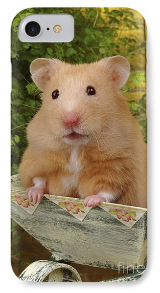 Orange Hamster Ha106 IPhone Case by Greg Cuddiford