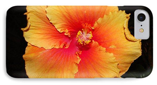 Orange Hibiscus IPhone Case by Cindy Croal