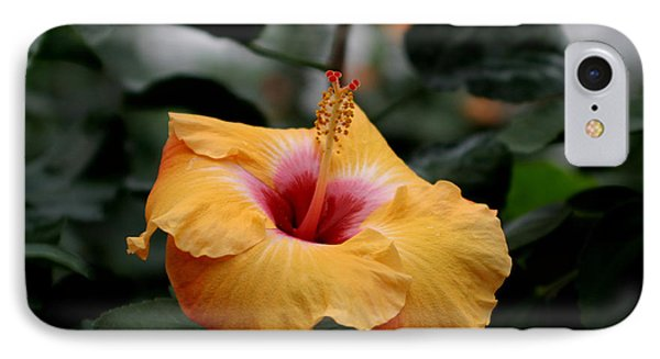 Orange Hibiscus IPhone Case by Living Color Photography Lorraine Lynch