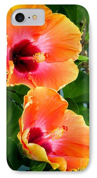 Orange Hibiscuses IPhone Case by Zina Stromberg