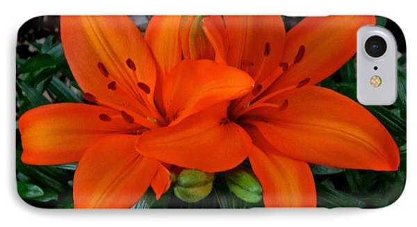 Orange Lilies IPhone Case by Jeff Gater