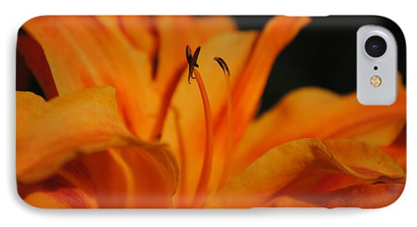 Orange Lily IPhone Case by Robert  Moss