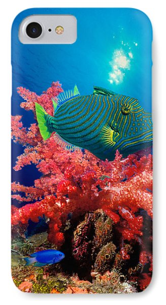 Orange-lined Triggerfish Balistapus IPhone Case by Panoramic Images