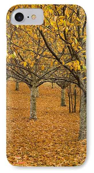 Orange Orchard Phone Case by Tim Hester