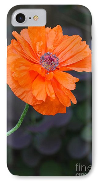 IPhone Case featuring the photograph Orange Poppy by Steve Augustin