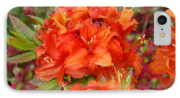 Orange Rhododendron Flowers Art Prints Phone Case by Baslee Troutman