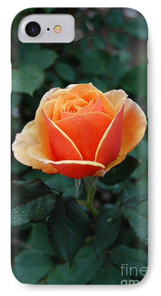 IPhone Case featuring the photograph Orange Rose by Eva Kaufman