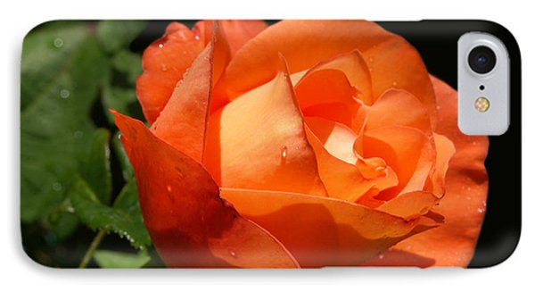 IPhone Case featuring the photograph Orange Rose by Haleh Mahbod