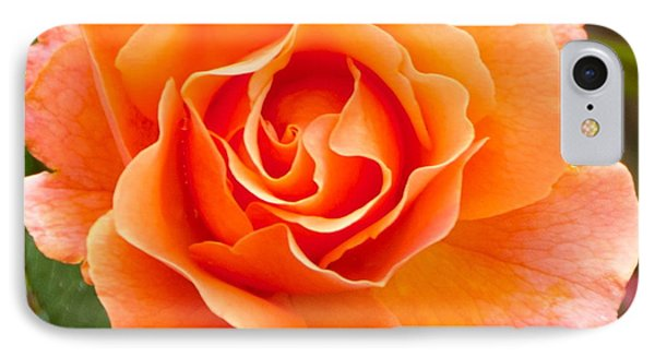 Orange Rose Lillian IPhone Case