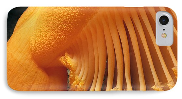 Orange Sea Pen IPhone Case by Jeff Rotman