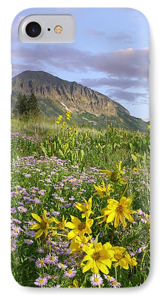Orange Sneezeweed And Smooth Asters IPhone Case by Tim Fitzharris