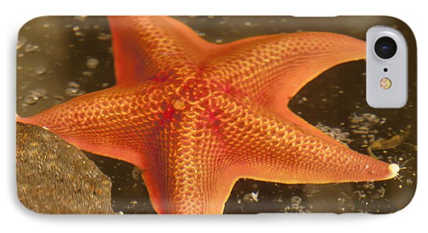 Orange Starfish In California Ocean Phone Case by Artist and Photographer Laura Wrede