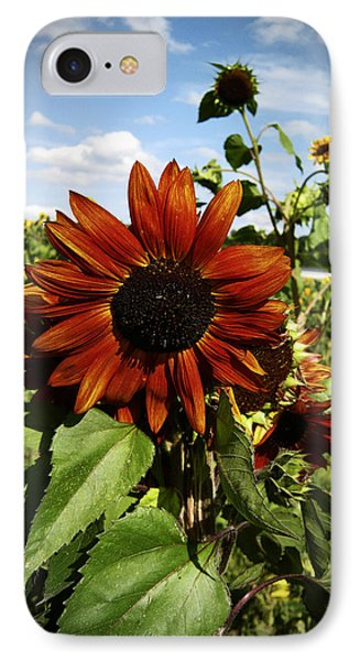 Orange Sunflower Phone Case by Nafets Nuarb