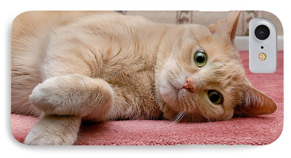 Orange Tabby Cat Lying Down Phone Case by Amy Cicconi