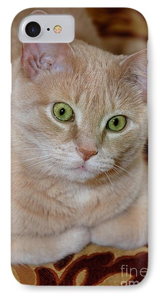 Orange Tabby Cat Poses Royally IPhone Case