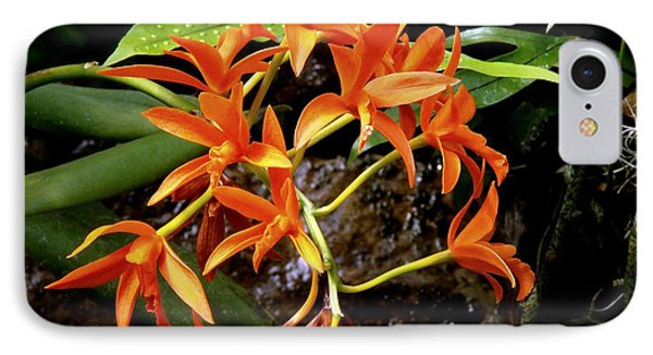 Orange Tendrils IPhone Case by Rodney Lee Williams