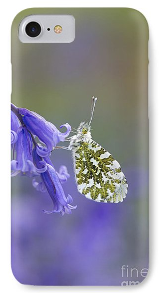Orange Tip Butterfly IPhone Case by Tim Gainey