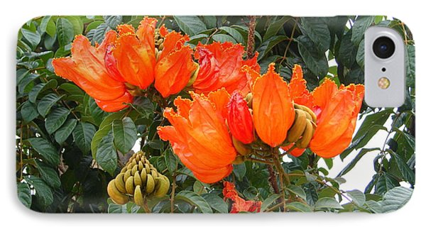 IPhone Case featuring the photograph Orange Tree Blossoms by Lew Davis