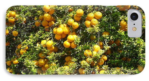 Orange Trees IPhone Case by Mark Barclay