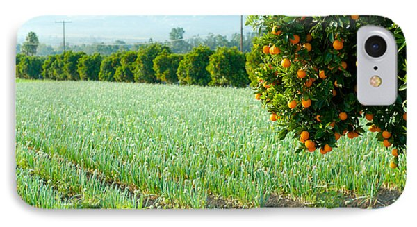 Oranges On A Tree With Onions Crop IPhone Case by Panoramic Images