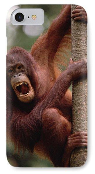 Orangutan Hanging On Tree Phone Case by Gerry Ellis