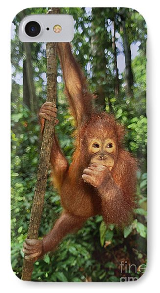 Orangutan  Phone Case by Frans Lanting MINT Images