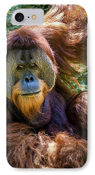 Orangutan IPhone Case by Rob Amend