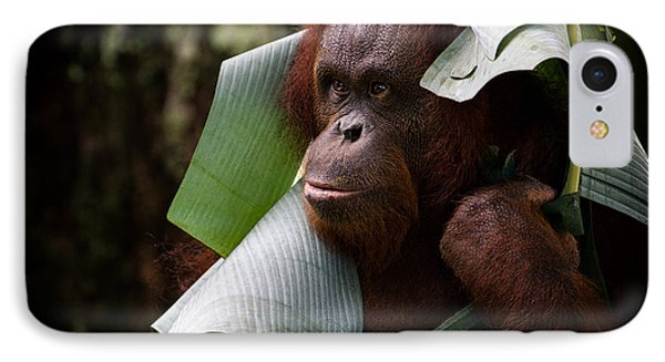 IPhone Case featuring the photograph Orangutan by Zoe Ferrie