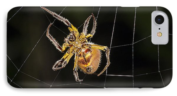 Orb-weaver Spider In Web Panguana IPhone 7 Case by Konrad Wothe