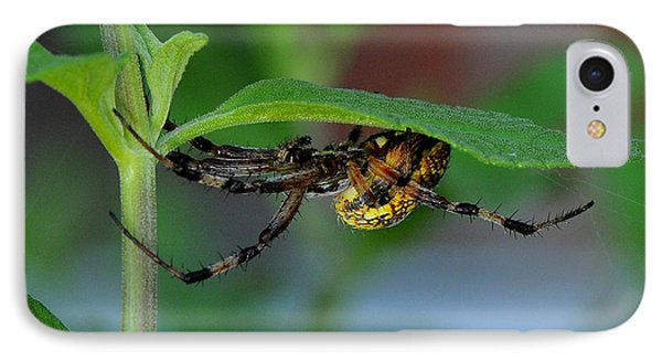 IPhone Case featuring the photograph Orb Weaver Spider by Karen Slagle