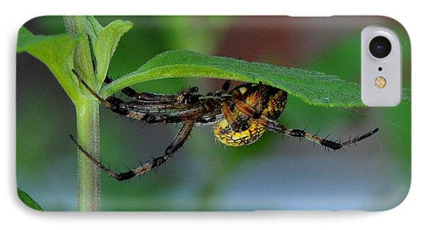Orb Weaver Spider IPhone Case by Karen Slagle