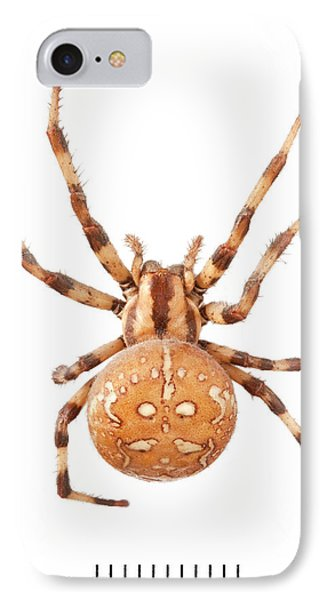 Orb Web Spider IPhone Case