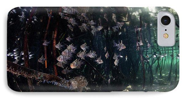 Orbiculate Cardinalfish Swiming IPhone Case