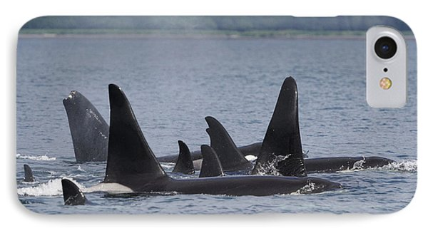 Orca Pod Surfacing Prince William Sound IPhone Case