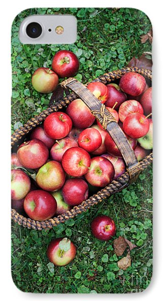 Orchard Fresh Picked Apples IPhone Case by Edward Fielding