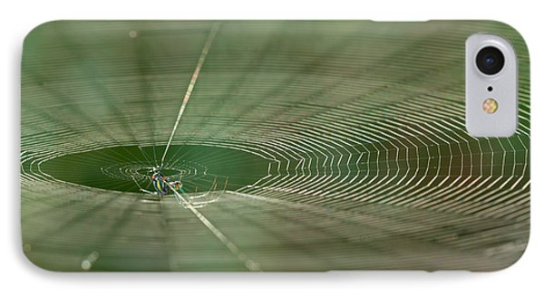 IPhone Case featuring the photograph Orchard Orbweaver #2 by Paul Rebmann