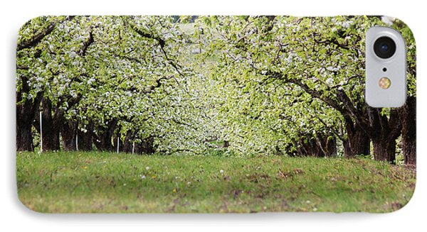 IPhone Case featuring the photograph Orchard by Patricia Babbitt