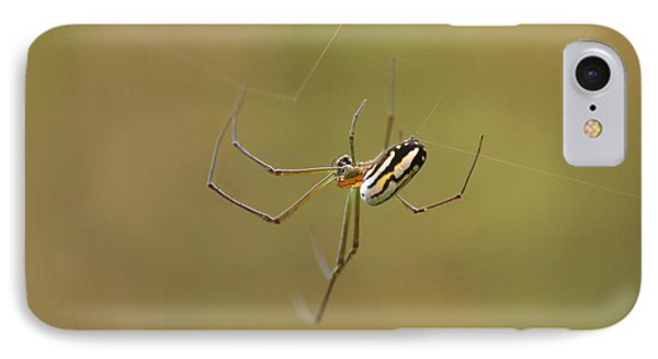 IPhone Case featuring the photograph Orchard Spider by Greg Allore