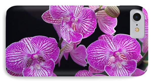 Orchid 1 IPhone Case by Sheila Byers