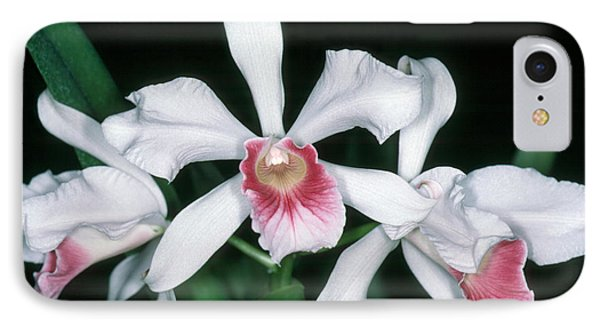 Orchid 10 IPhone Case